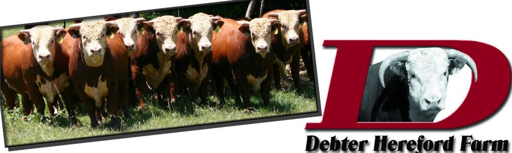 Debter Hereford Farm